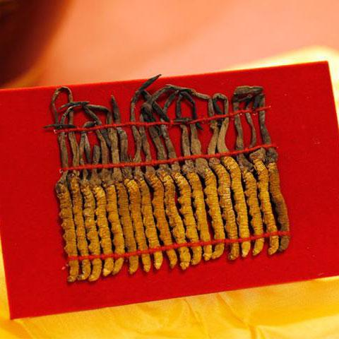 Quà tặng đông trùng hạ thảo