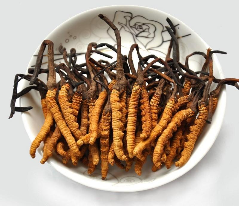 Nhung-dieu-luu-y-khi-su-dung-dong-trung-ha-thao-2