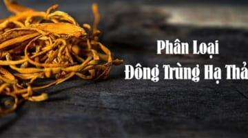Điểm Danh Các Loại Đông Trùng Hạ Thảo Trên Thị Trường Việt Nam