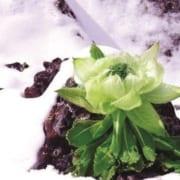 tuyết liên hoa 4