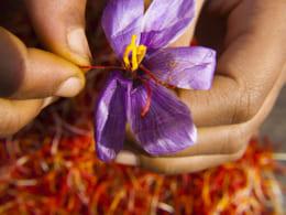 Nhụy hoa nghệ tây - Saffron 2