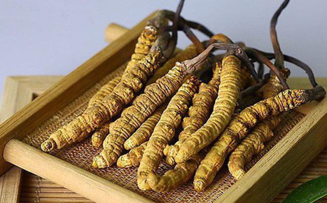 quy trình sản xuất đông trùng hạ thảo